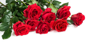 Bouquet des roses rouges Photo stock