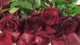 Bouquet des roses rouges avec des gouttes de l'eau tombant au fond de la vidéo de longueur d'actions de mouvement lent de pétales banque de vidéos