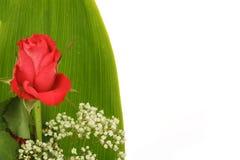 Bouquet des roses rouges fra?ches sur le blanc Image stock