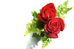 Bouquet des roses rouges sur un fond blanc Photos stock