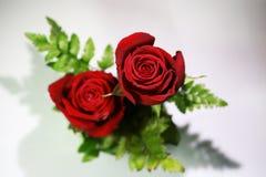 Bouquet des roses rouges sur un fond blanc Photographie stock