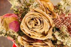 Bouquet des roses sèches Images libres de droits