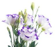 Bouquet des roses sensibles Photographie stock