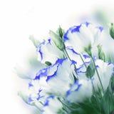 Bouquet des roses sensibles Photo stock