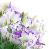 Bouquet des roses sensibles Photos libres de droits