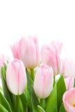 Bouquet des tulipes Photos stock
