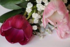 Bouquet des tulipes Photo stock