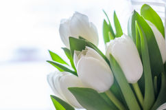 Bouquet des tulipes blanches Photos libres de droits