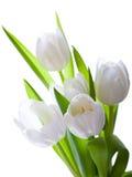 Bouquet des tulipes blanches d'isolement sur le fond blanc Photo libre de droits