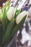 Bouquet des tulipes blanches fraîches, dans le style de vintage Image stock