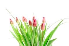 Bouquet des tulipes d'isolement sur le blanc Photos libres de droits