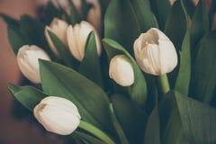 Bouquet des tulipes dans de rétros couleurs en pastel dans le style de vintage comme fond de salutations Images stock