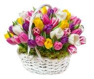 Bouquet des tulipes dans un panier Photos stock