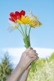 Bouquet des tulipes de floraison chez les mains de la femme sur un fond de ciel bleu Images libres de droits