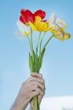 Bouquet des tulipes de floraison chez les mains de la femme sur un fond de ciel bleu Photographie stock