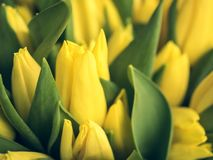 Bouquet des tulipes de ressort, colorées et lumineuses Photographie stock libre de droits