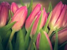 Bouquet des tulipes de ressort, colorées et lumineuses Photos libres de droits