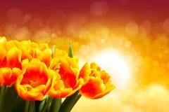 Bouquet des tulipes devant la scène de ressort Photos stock