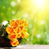 Bouquet des tulipes devant la scène de ressort Image stock
