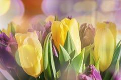 Bouquet des tulipes jaunes avec le pourpre photographie stock libre de droits