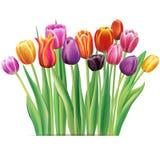 Bouquet des tulipes multicolores Image stock