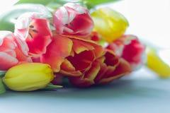 Bouquet des tulipes multicolores sur un fond gris image libre de droits