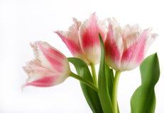 Bouquet des tulipes roses Image libre de droits