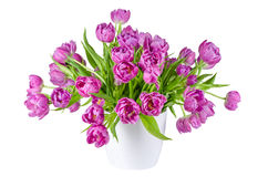 Bouquet des tulipes roses dans le pot de fleurs d'isolement sur le blanc Photo stock