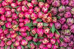 Bouquet des tulipes rouges à vendre Image libre de droits