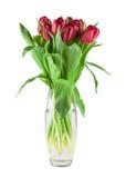 Bouquet des tulipes rouges photos libres de droits