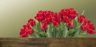 Bouquet des tulipes rouges Photographie stock libre de droits