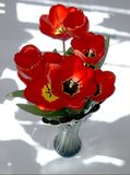 Bouquet des tulipes rouges dans un vase photo libre de droits