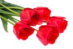 Bouquet des tulipes rouges de floraison d'isolement sur le blanc Photo stock