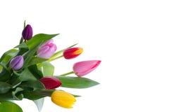Bouquet des tulipes sur le fond blanc Images stock