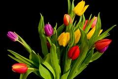 Bouquet des tulipes sur le noir. Images stock