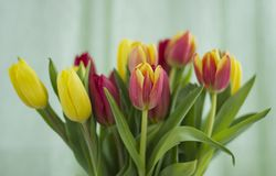 Bouquet des tulipes sur un fond clair photo stock