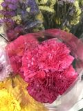 A bouquet of Dianthus caryophyllus or Carnation flower. Royalty Free Stock Image