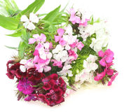 Bouquet of dianthus in a white backgroun Royalty Free Stock Photography