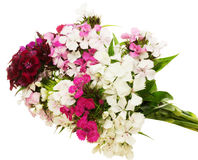 Bouquet of dianthus in a white background Royalty Free Stock Photo