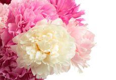Bouquet of different color peonies Royalty Free Stock Photos