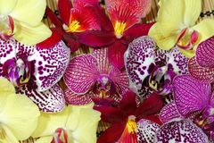 Bouquet of different orchid flowers Royalty Free Stock Photo