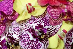 Bouquet of different orchid flowers Royalty Free Stock Photography