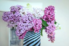 A bouquet of differently colored lilacs. Of different colors in a striped vase on a light background Stock Photo