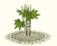 Bouquet of dollars Stock Images