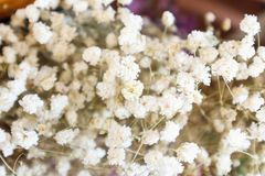 Bouquet of dried flowers Royalty Free Stock Photography