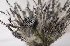 Bouquet of dried flowers. Bunch of Lavender. Flowers stock image