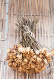 Bouquet of dried flowers hanging on bamboo background Royalty Free Stock Images