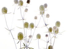 Bouquet of dried flowers Royalty Free Stock Photo