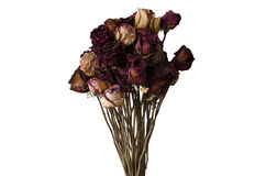 Bouquet of dried flowers on a white background Royalty Free Stock Images