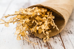 Bouquet of Dried Herbs Royalty Free Stock Photo